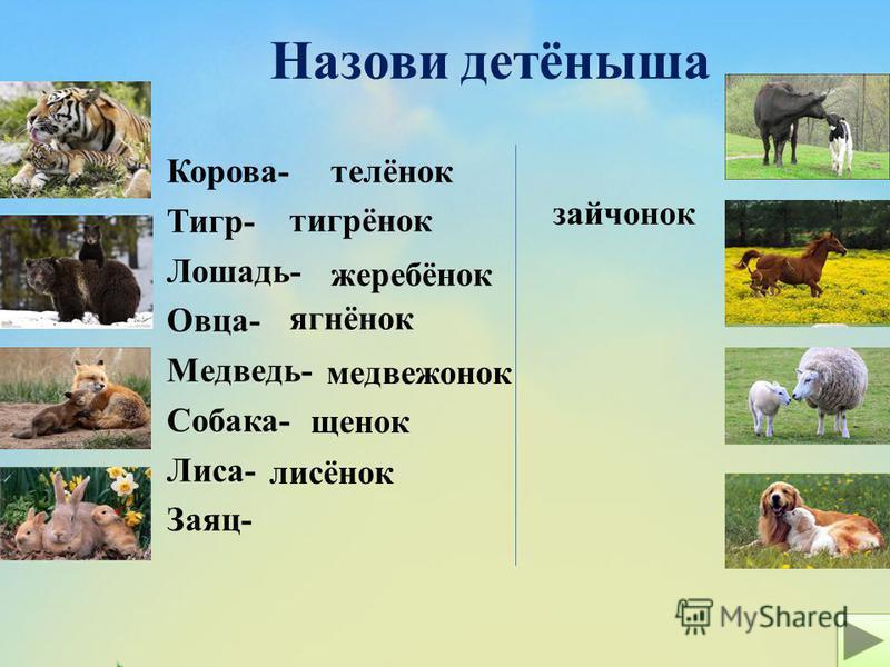 Назови детёныша Корова- Тигр- Лошадь- Овца- Медведь- Собака- Лиса- Заяц- телёнок жеребёнок ягнёнок щенок медвежонок лисёнок зайчонок тигрёнок