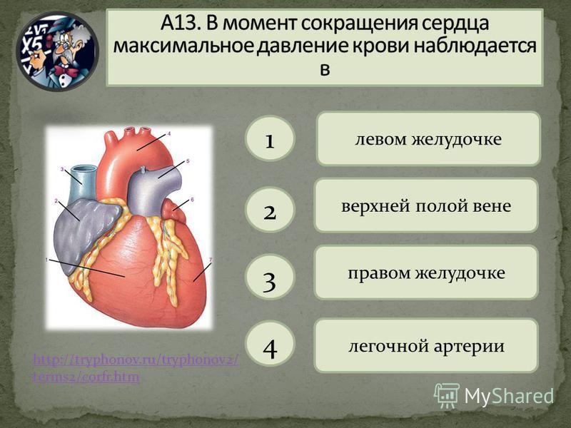 http://tryphonov.ru/tryphonov2/ terms2/corfr.htm левом желудочке 1 2 3 4 верхней полой вене правом желудочке легочной артерии