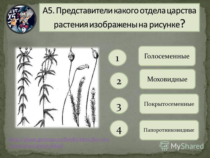 1 2 3 4 Голосеменные Моховидные Покрытосеменные Папоротниковидные http://plant.geoman.ru/books/item/f00/s00 /z0000000/st000.shtml