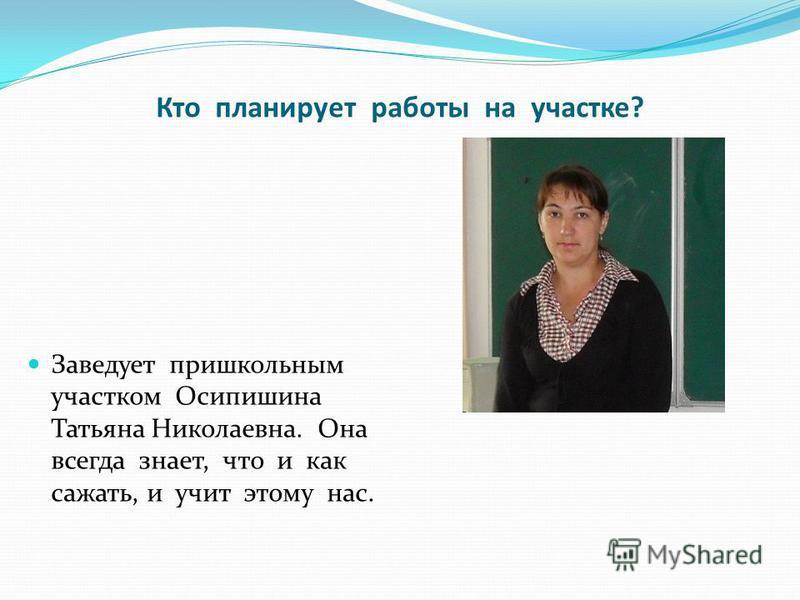 Кто планирует работы на участке? Заведует пришкольным участком Осипишина Татьяна Николаевна. Она всегда знает, что и как сажать, и учит этому нас.