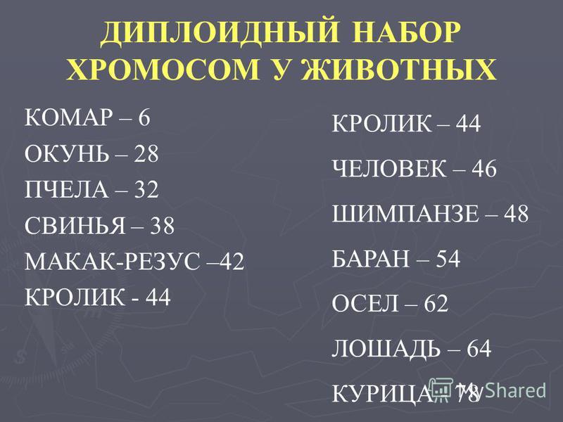 ДИПЛОИДНЫЙ НАБОР ХРОМОСОМ У ЖИВОТНЫХ КОМАР – 6 ОКУНЬ – 28 ПЧЕЛА – 32 СВИНЬЯ – 38 МАКАК-РЕЗУС –42 КРОЛИК - 44 КРОЛИК – 44 ЧЕЛОВЕК – 46 ШИМПАНЗЕ – 48 БАРАН – 54 ОСЕЛ – 62 ЛОШАДЬ – 64 КУРИЦА - 78