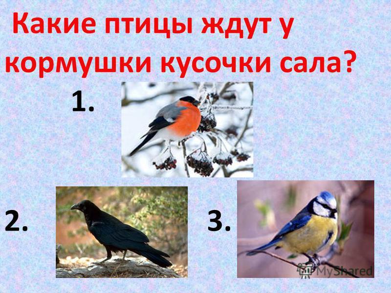 Какие птицы ждут у кормушки кусочки сала? 1. 2. 3.