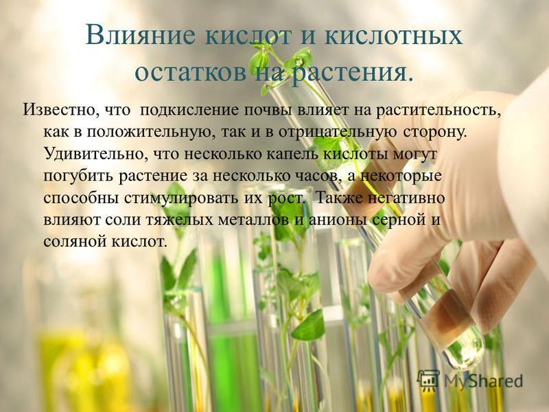 Влияние кислот и кислотных остатков на растения. Известно, что подкисление почвы влияет на растительность, как в положительную, так и в отрицательную сторону. Удивительно, что несколько капель кислоты могут погубить растение за несколько часов, а нек