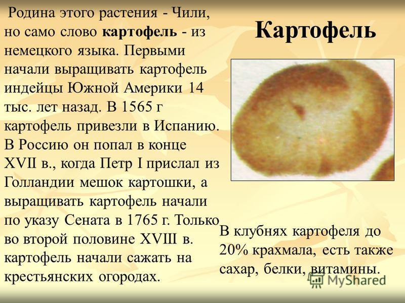 Родина этого растения - Чили, но само слово картофель - из немецкого языка. Первыми начали выращивать картофель индейцы Южной Америки 14 тыс. лет назад. В 1565 г картофель привезли в Испанию. В Россию он попал в конце XVII в., когда Петр I прислал из