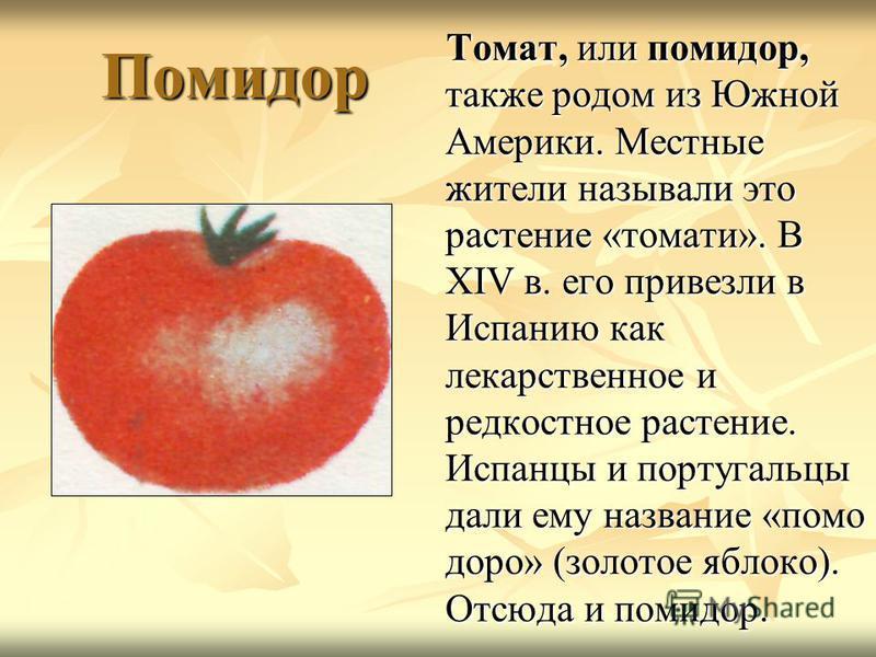 Помидор Помидор Томат, или помидор, также родом из Южной Америки. Местные жители называли это растение «томаты». В XIV в. его привезли в Испанию как лекарственное и редкостное растение. Испанцы и португальцы дали ему название «помощьщь добро» (золото