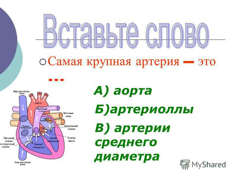 К транспортным системам организма относятся … и … системы Лимфатическая кровеносная
