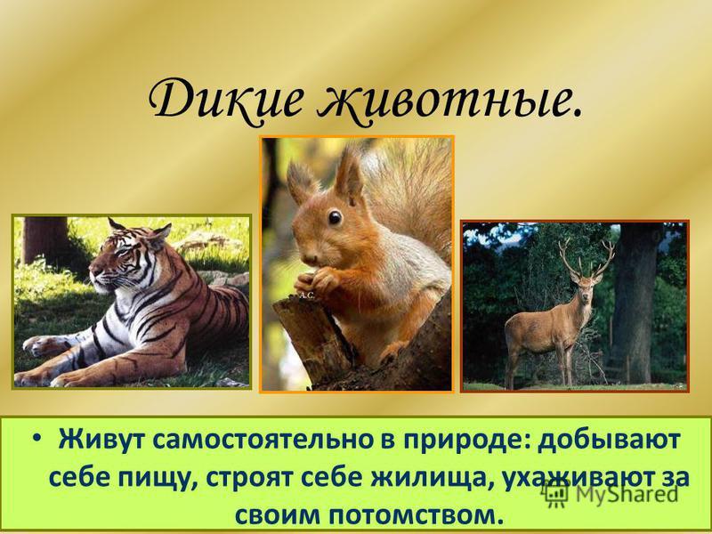 Дикие животные. Живут самостоятельно в природе: добывают себе пищу, строят себе жилища, ухаживают за своим потомством.