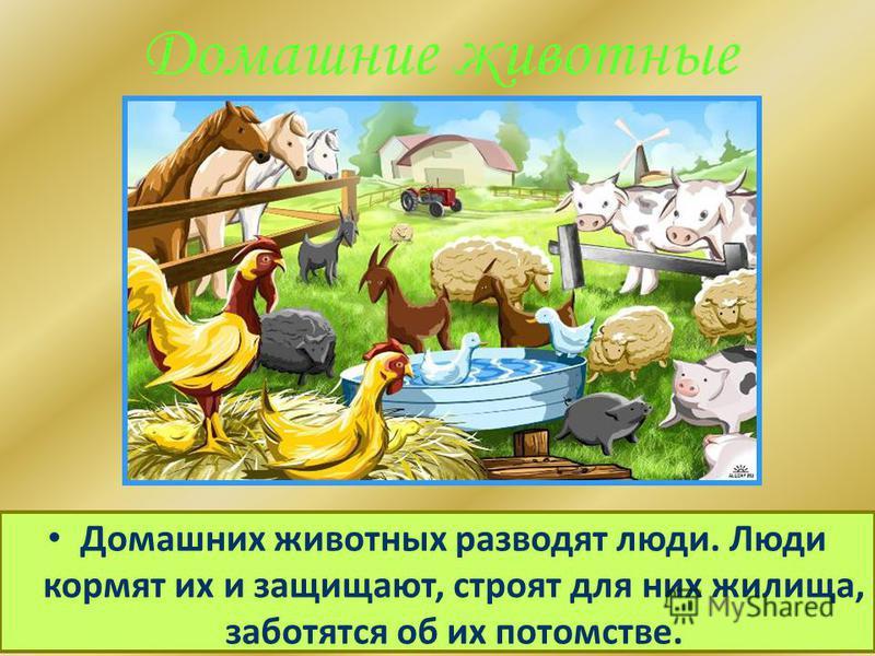 Домашние животные Домашних животных разводят люди. Люди кормят их и защищают, строят для них жилища, заботятся об их потомстве.