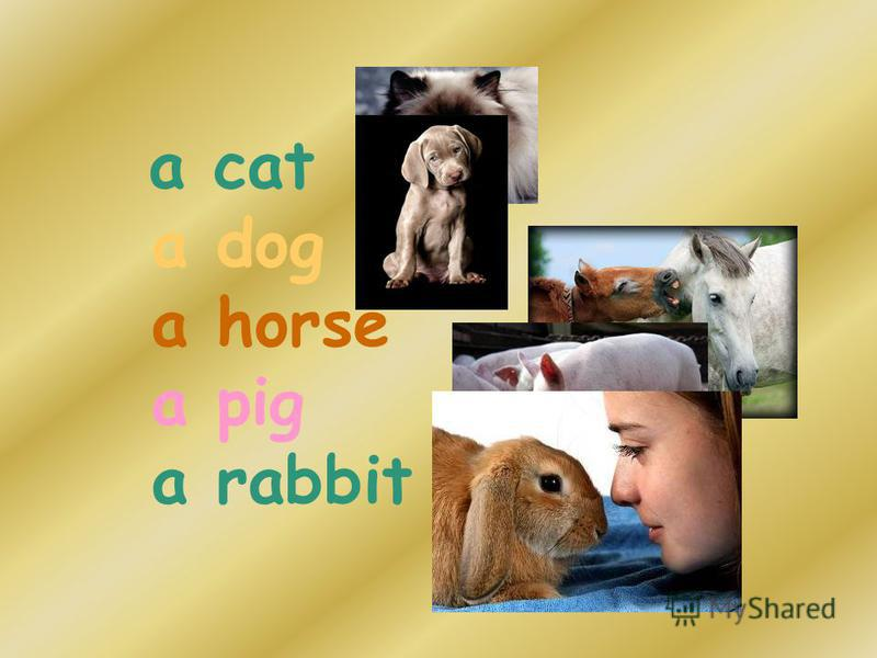 a cat a dog a horse a pig a rabbit