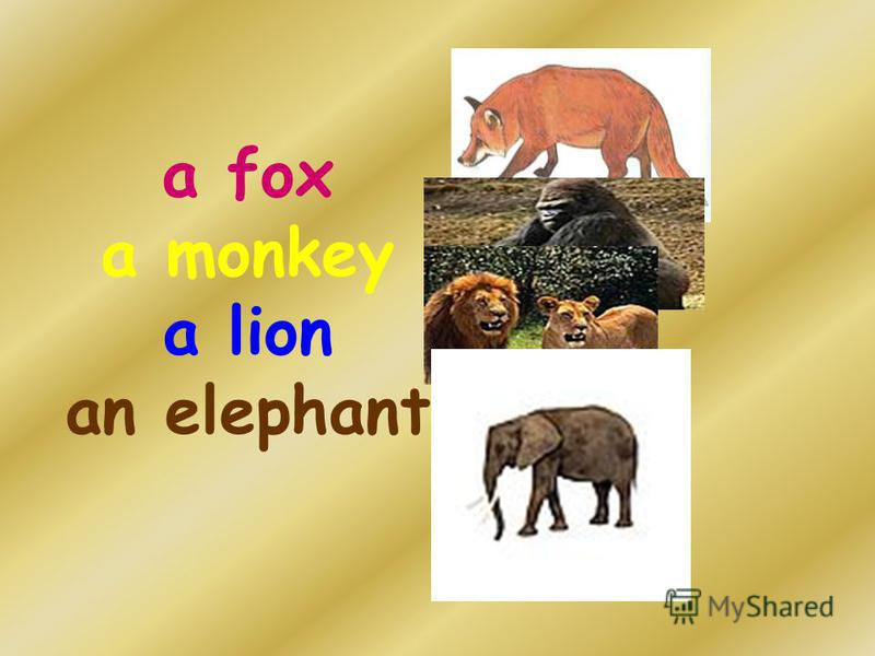 a fox a monkey a lion an elephant