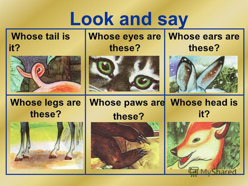 Look and say Whose tail is it? Whose eyes are these? Whose ears are these? Whose legs are these? Whose head is it? Whose paws are these?