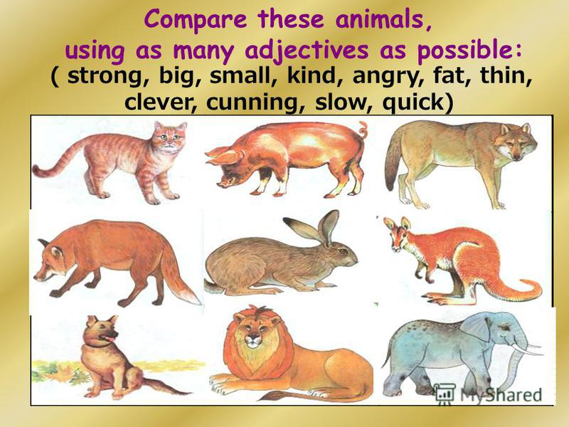 Compare these animals, using as many adjectives as possible: ( strong, big, small, kind, angry, fat, thin, clever, cunning, slow, quick)