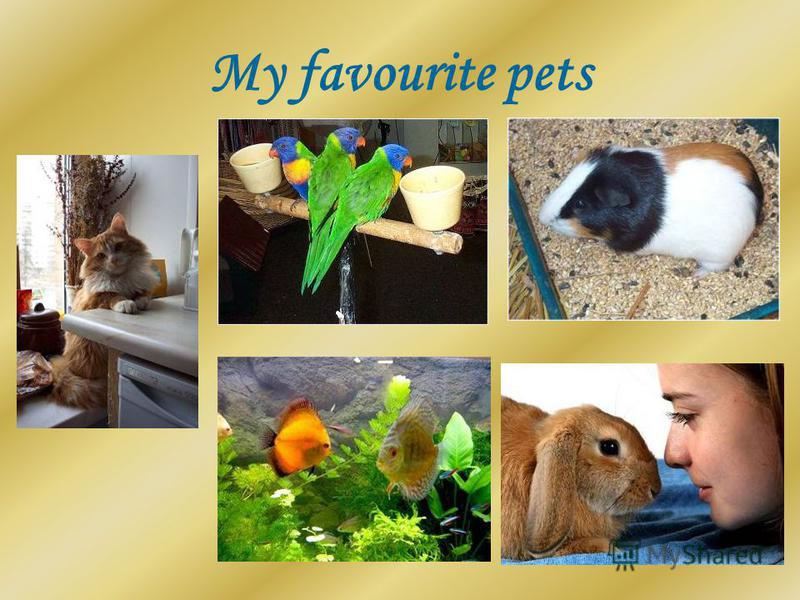 My favourite pets