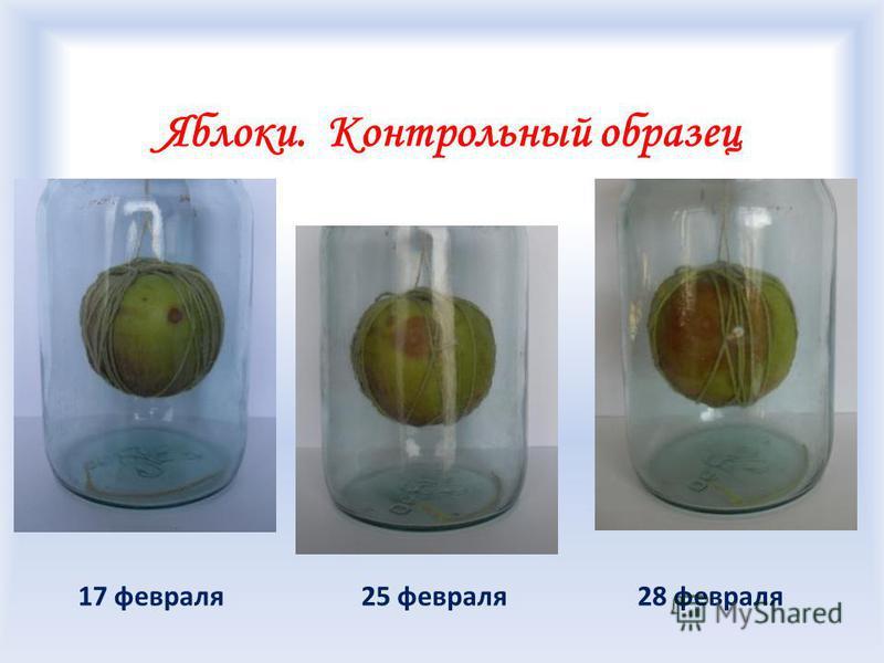 Яблоки. Контрольный образец 25 февраля 28 февраля 17 февраля