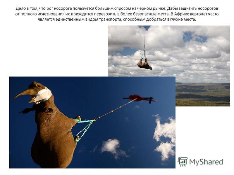 Дело в том, что рог носорога пользуется большим спросом на черном рынке. Дабы защитить носорогов от полного исчезновения их приходится перевозить в более безопасные места. В Африке вертолет часто является единственным видом транспорта, способным добр