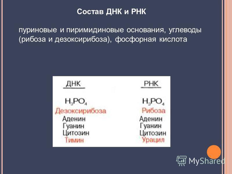 Состав ДНК и РНК пуриновые и пиримидиновые основания, углеводы (рибоза и дезоксирибоза), фосфорная кислота