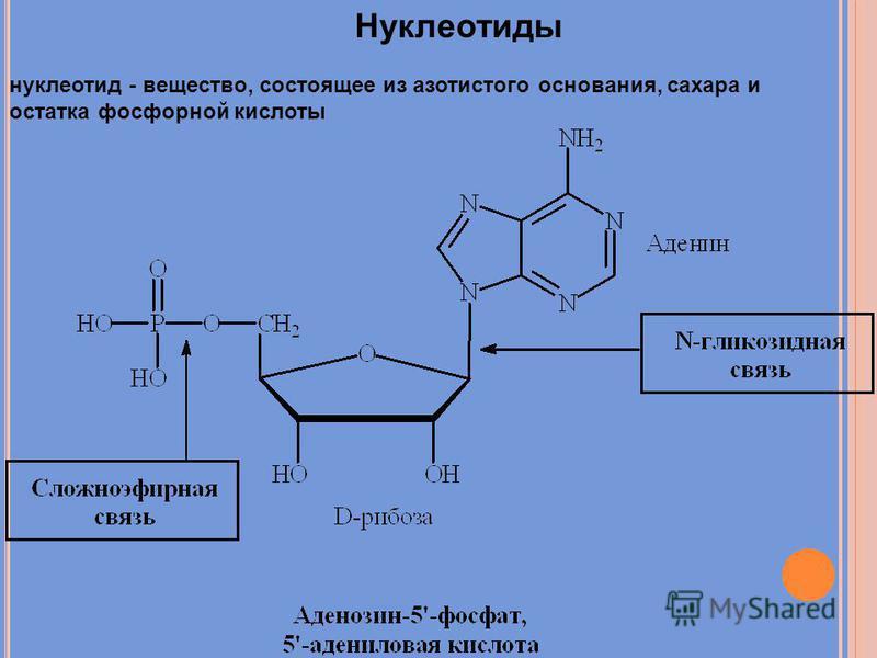 Нуклеотиды нуклеотид - вещество, состоящее из азотистого основания, сахара и остатка фосфорной кислоты