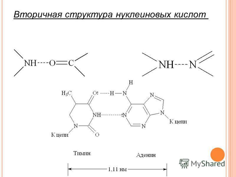 Вторичная структура нуклеиновых кислот