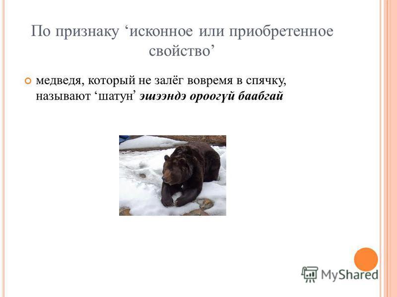 По признаку исконное или приобретенное свойство медведя, который не залёг вовремя в спячку, называют шатун эшээндэ ороогүй баабгай