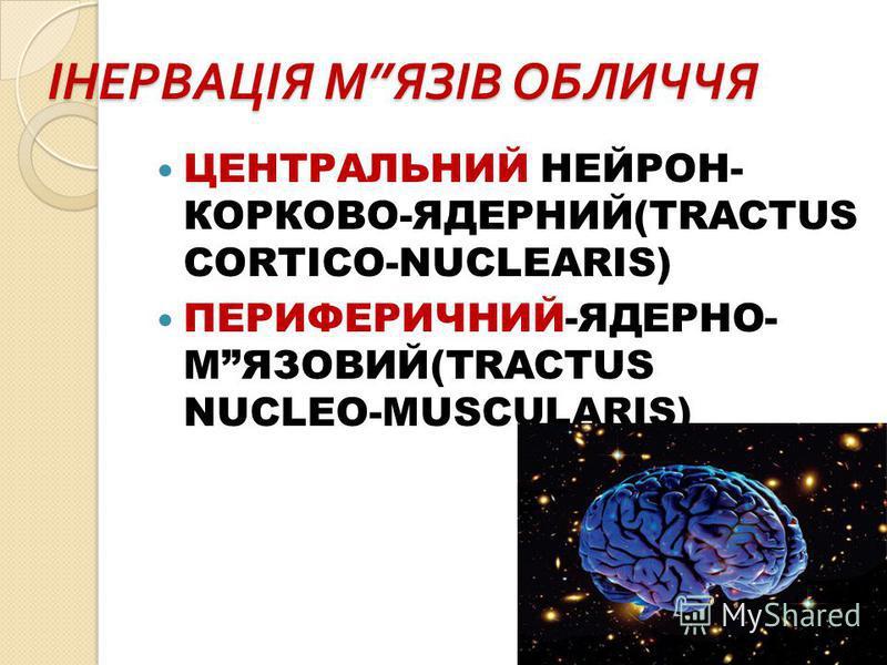 ІНЕРВАЦІЯ М ЯЗІВ ОБЛИЧЧЯ ЦЕНТРАЛЬНИЙ НЕЙРОН- КОРКОВО-ЯДЕРНИЙ(TRACTUS CORTICO-NUCLEARIS) ПЕРИФЕРИЧНИЙ-ЯДЕРНО- МЯЗОВИЙ(TRACTUS NUCLEO-MUSCULARIS)