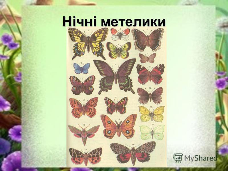 Нічні метелики