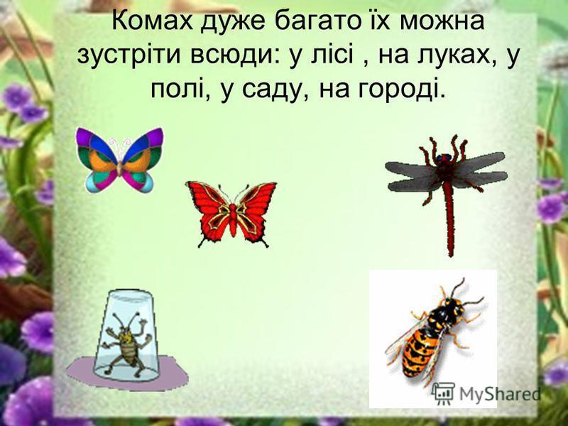 Комах дуже багато їх можна зустріти всюди: у лісі, на луках, у полі, у саду, на городі.