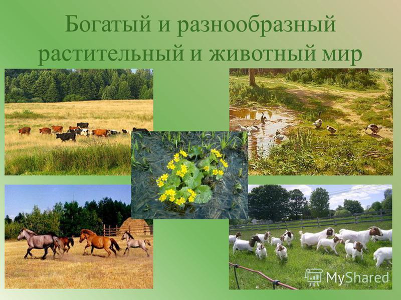Богатый и разнообразный растительный и животный мир 3