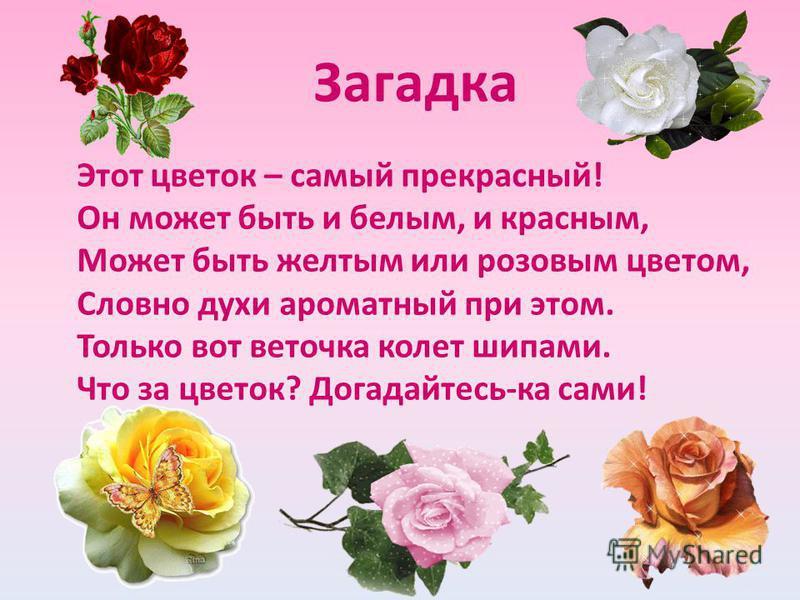 Загадка Этот цветок – самый прекрасный! Он может быть и белым, и красным, Может быть желтым или розовым цветом, Словно духи ароматный при этом. Только вот веточка колет шипами. Что за цветок? Догадайтесь-ка сами!