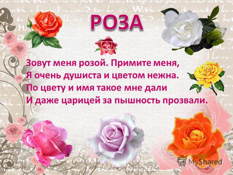 Зовут меня розой. Примите меня, Я очень душиста и цветом нежна. По цвету и имя такое мне дали И даже царицей за пышность прозвали.