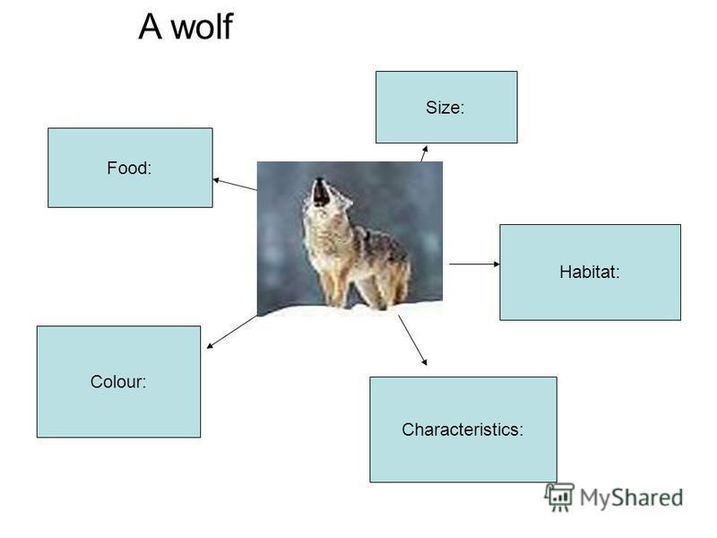 Size: Food: Habitat: Colour: Characteristics: A wolf