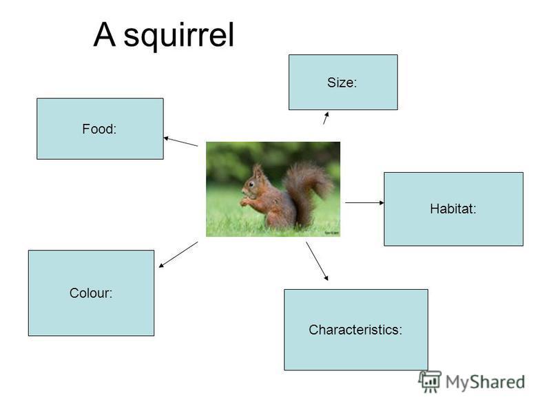 Size: Food: Habitat: Colour: Characteristics: A squirrel