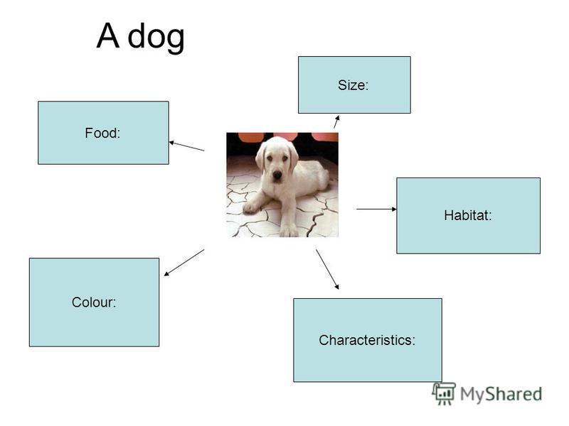 Size: Food: Habitat: Colour: Characteristics: A dog
