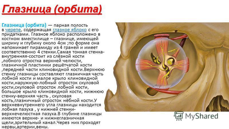 Глазница (орбита) Глазница (орбита) парная полость в черепе, содержащая глазное яблоко с его придатками. Глазное яблоко расположено в костном вместилище – глазнице, имеющей ширину и глубину около 4 см ;по форме она напоминает пирамиду из 4 граней и и
