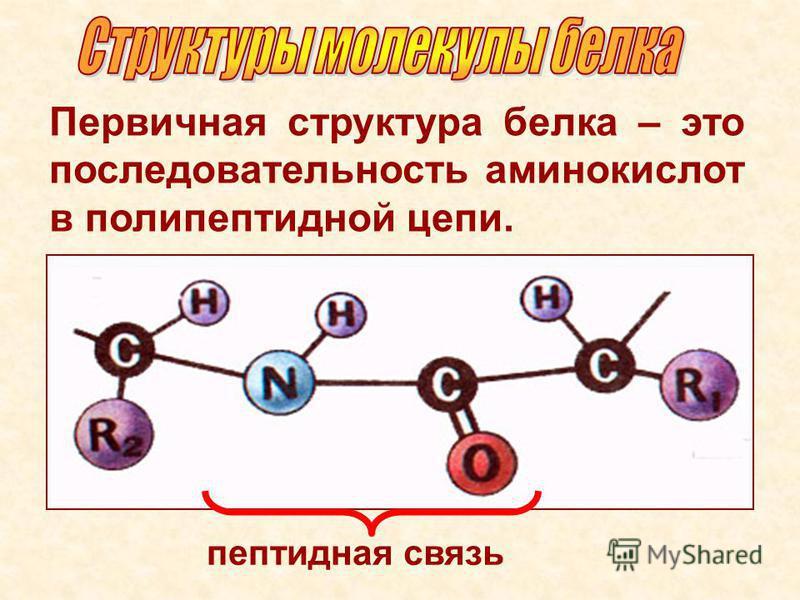 Первичная структура белка – это последовательность аминокислот в полипептиддной цепи. пептидная связь