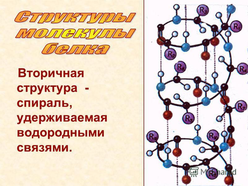 Вторичная структура - спираль, удерживаемая водороднами связями.