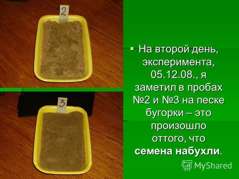 На второй день, эксперимента, 05.12.08., я заметил в пробах 2 и 3 на песке бугорки – это произошло оттого, что семена набухли. На второй день, эксперимента, 05.12.08., я заметил в пробах 2 и 3 на песке бугорки – это произошло оттого, что семена набух