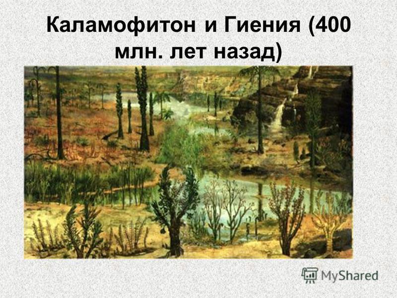 Каламофитон и Гиения (400 млн. лет назад)