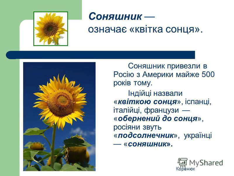 Коренюк Соняшник привезли в Росію з Америки майже 500 років тому. Індійці назвали «квіткою сонця», іспанці, італійці, французи «обернений до сонця», росіяни звуть «подсолнечник», українці «соняшник». Соняшник означає «квітка сонця».