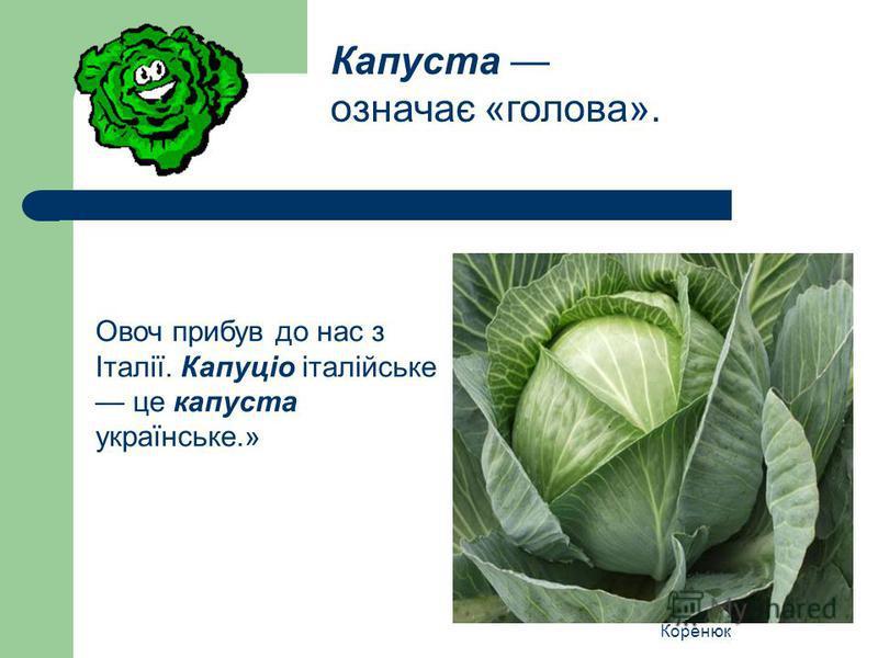 Коренюк Овоч прибув до нас з Італії. Капуціо італійське це капуста українське.» Капуста означає «голова».