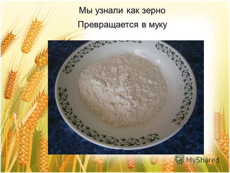 Мы узнали как зерно Превращается в муку