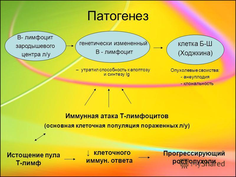 Патогенез – утратил способность к апоптозу и синтезу Ig клетка Б-Ш (Ходжкина) B- лимфоцит зародышевого центра л/у Опухолевые свойства: - анеуплоидия - клональность генетически измененный В - лимфоцит Иммунная атака Т-лимфоцитов (основная клеточная по