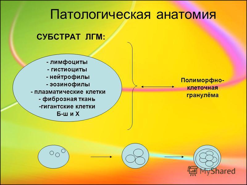 Патологическая анатомия СУБСТРАТ ЛГМ: - лимфоциты - гистиоциты - нейтрофилы - эозинофилы - плазматические клетки - фиброзная ткань -гигантские клетки Б-ш и Х Полиморфно- клеточная гранулёма
