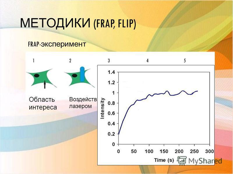 МЕТОДИКИ (FRAP, FLIP) FRAP- эксперимент Область интереса 12345 Воздействие лазером