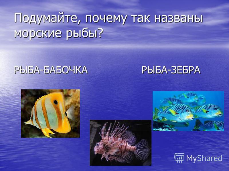 Подумайте, почему так названы морские рыбы? РЫБА-БАБОЧКА РЫБА-ЗЕБРА