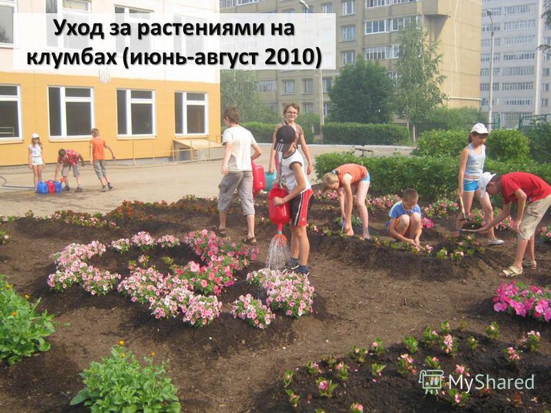 Уход за растениями на клумбах (июнь-август 2010)