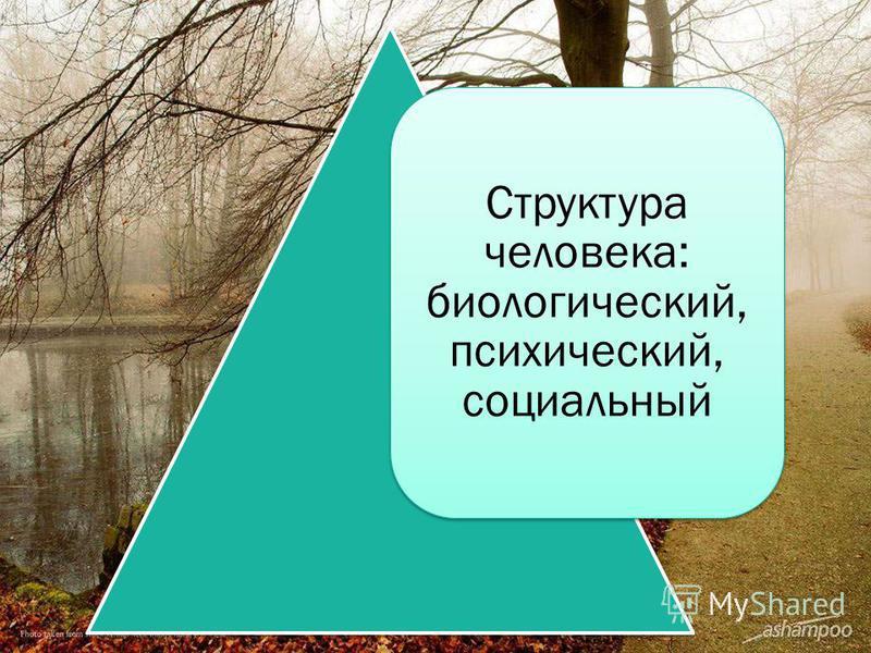 Структура человека: биологический, психический, социальный