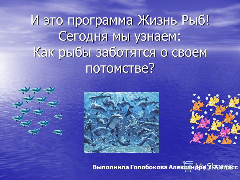 И это программа Жизнь Рыб! Сегодня мы узнаем: Как рыбы заботятся о своем потомстве? Выполнила Голобокова Александра 7-А класс
