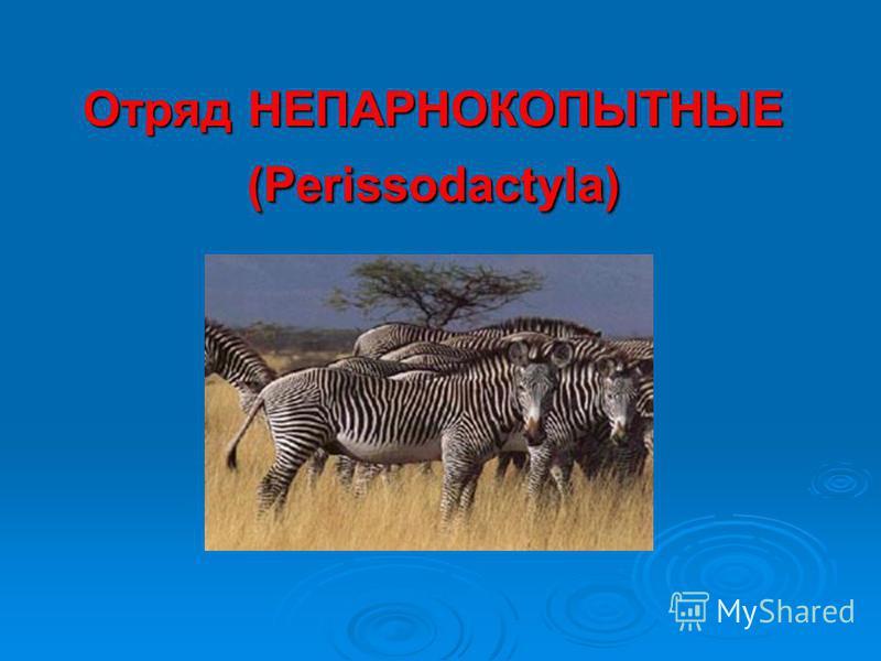 Отряд НЕПАРНОКОПЫТНЫЕ (Perissodactyla)