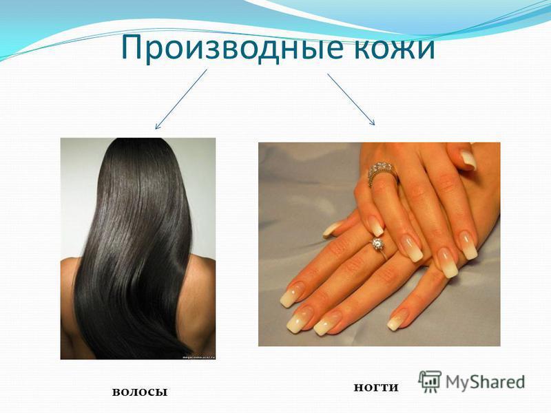 Производные кожи волосы ногти