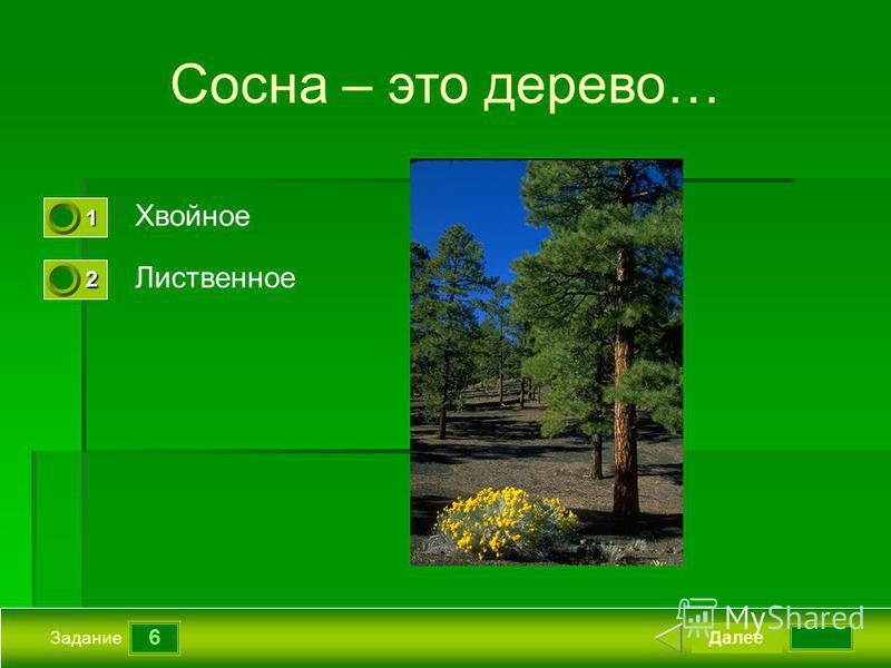 6 Задание Сосна – это дерево… Хвойное Лиственное Далее 1111 0 2222 0